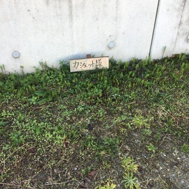 カシェットの第二駐車場
