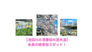 池田川の清廉桜の並木道のアイキャッチ画像