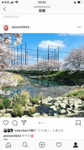 池田川沿いの電車と桜