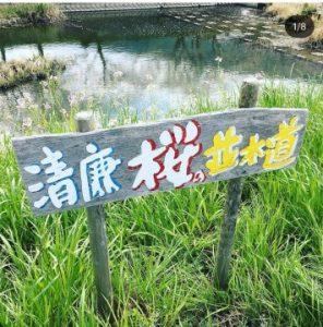 清廉桜の並木道の看板