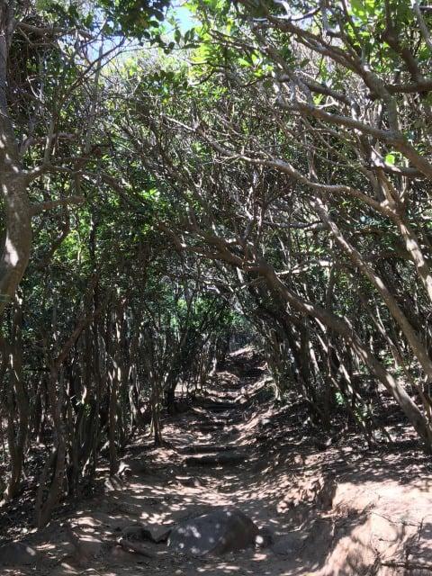芥屋の大門のトトロの森