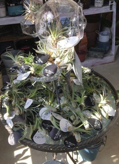 cocohaの小さな観葉植物