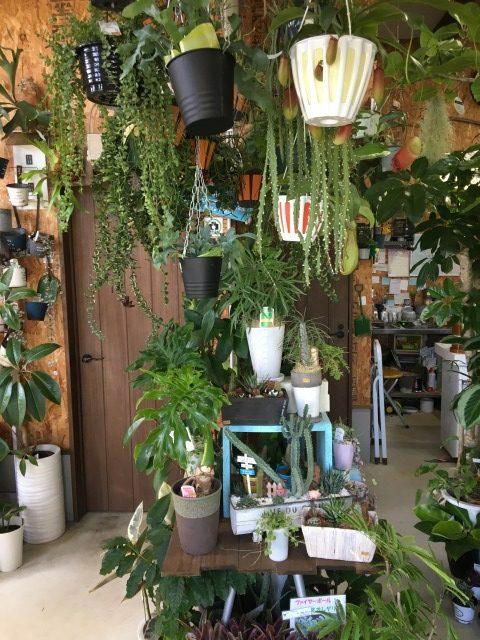 cocohaの観葉植物