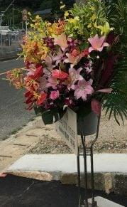 ラウレアシュリンプの花