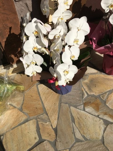 コンティニューの花