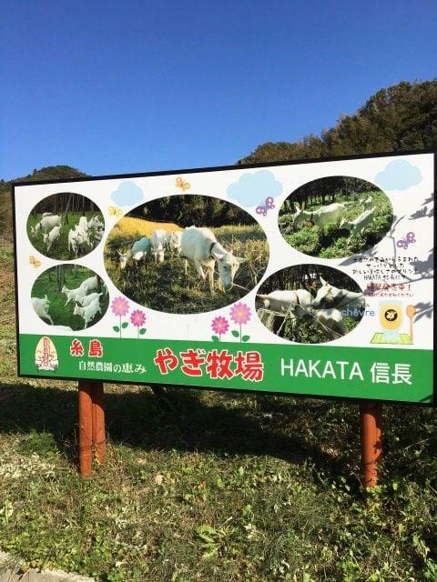 糸島志摩小金丸にあるヤギ牧場
