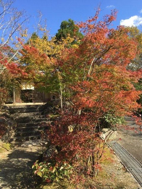 糸島ヤギ牧場の紅葉